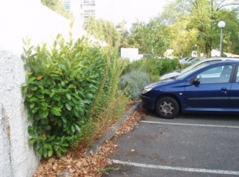 Entretien jardins et terrasses bordeaux signature verte for Paysagiste entretien espaces verts